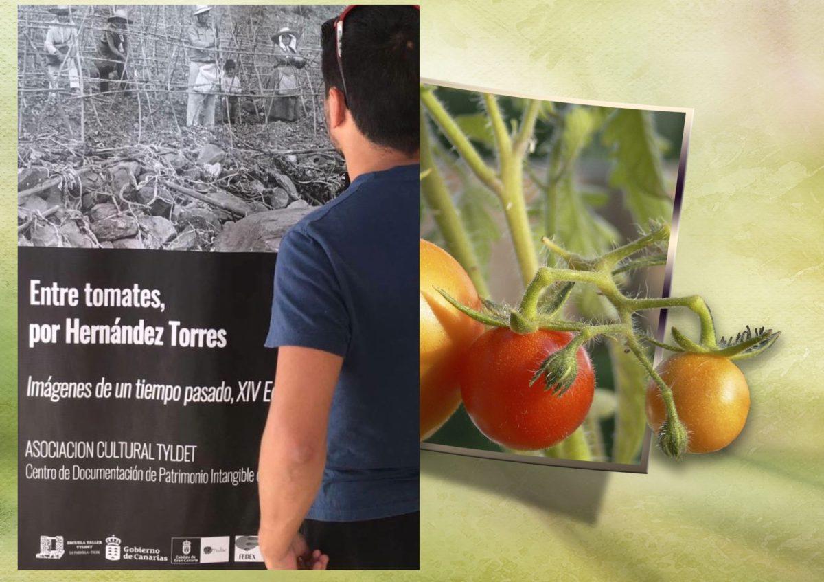 Entre tomates