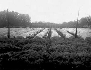 Paisaje plantaciones