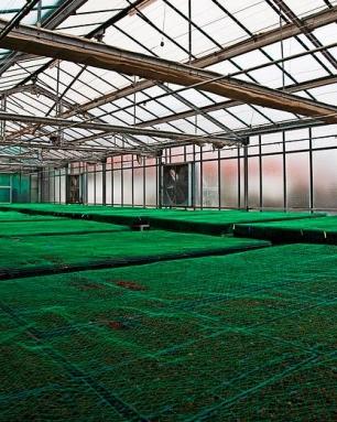 Invernadero agroenergético.