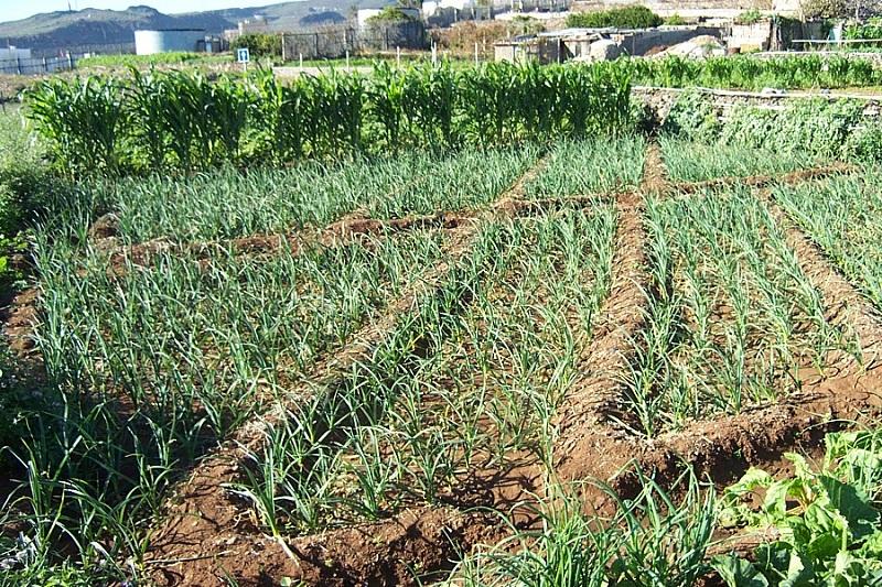 Cultivos agricultura ecológica.