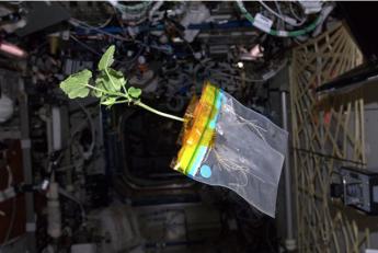 Planta de tomate en el espacio