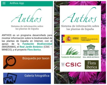 Proyecto Anthos