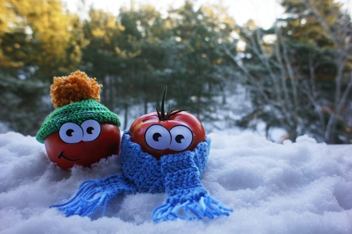 Tomates en la nieve